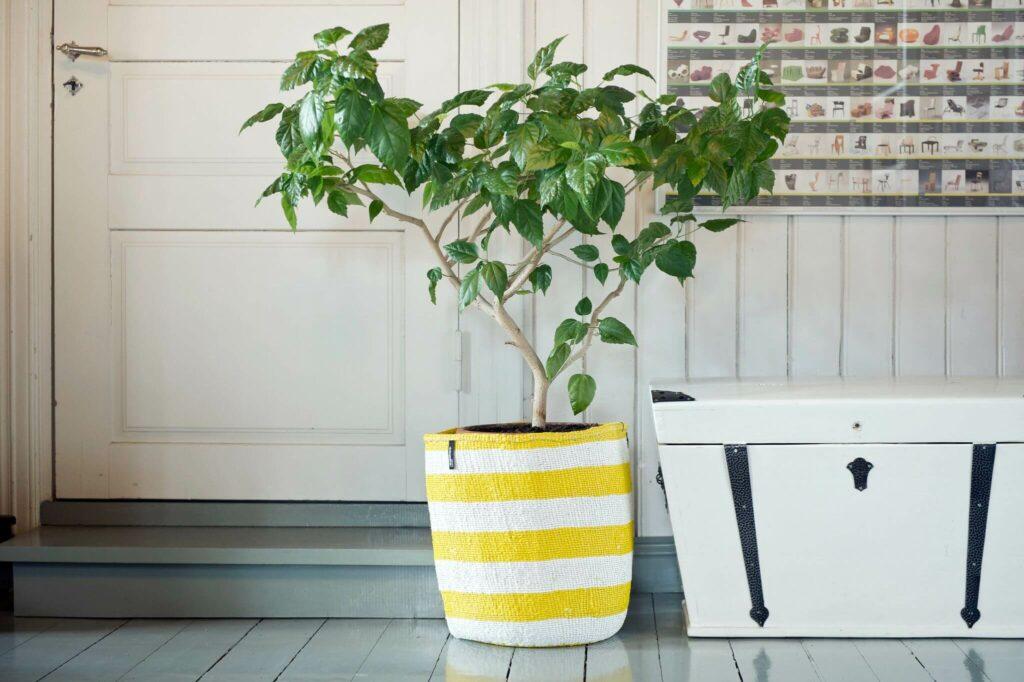 Moodbild eines Mifuko Kiondo Korbs in gelb-weiß gestreift, in welchem ein Baum platziert ist.