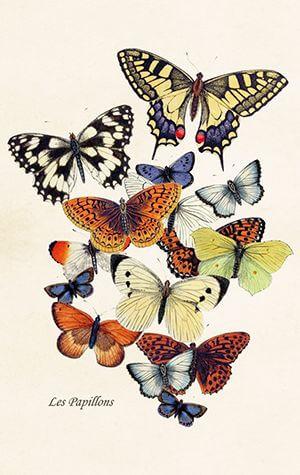 """Grußkarte """"Les Papillons"""" mit vielen Schmetterlingen."""